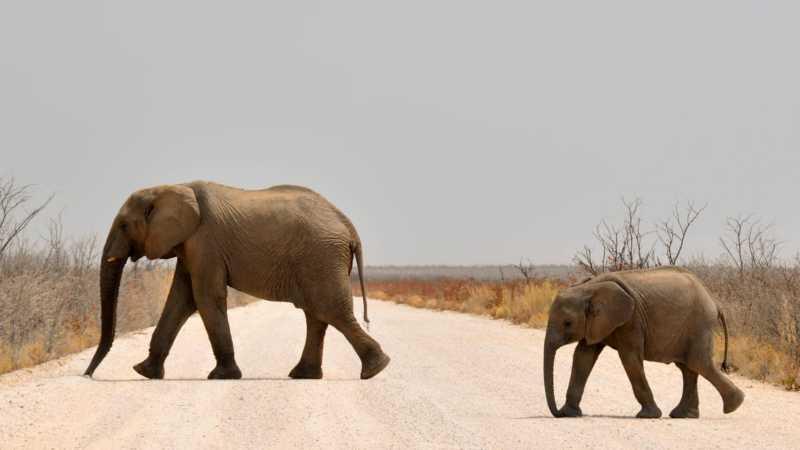 Familie Elefant dein Unterbewusstsein
